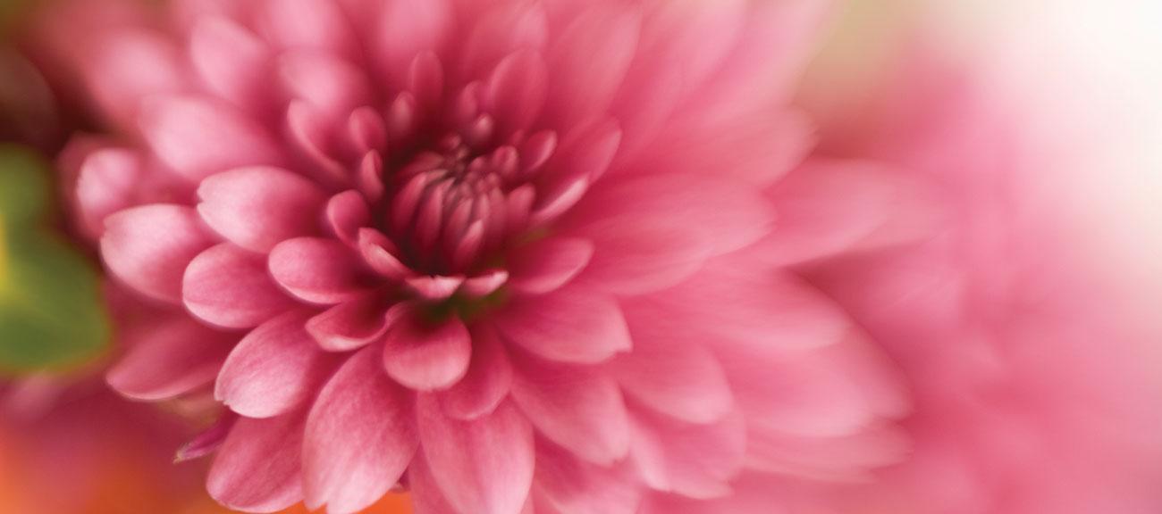 slider-flower